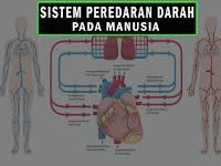Sistem Peredaran Darah Materi IPA Tema 4 Kelas 5 SD Kurikulum 2013