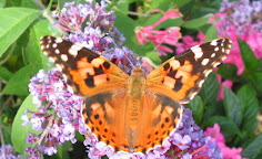 BUTTERFLY CONSERVATION LANCASHIRE BRANCH