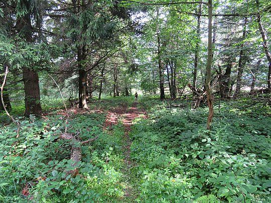 Wchodzimy na leśną ścieżkę.