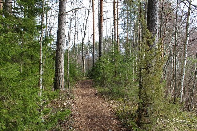 Kalmusaaren metsäpolkua