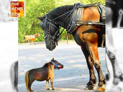 Kleinsten Pferde Der Welt