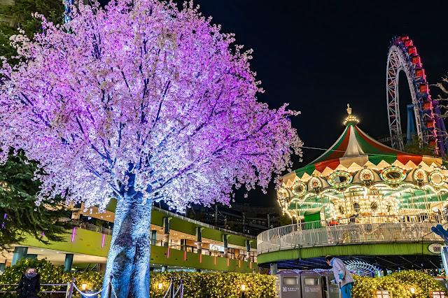 桜,ライトアップ,イルミネーション