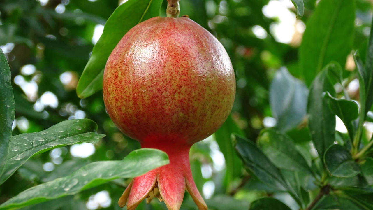 pomegranate fruit healthy fruits and vegetables list