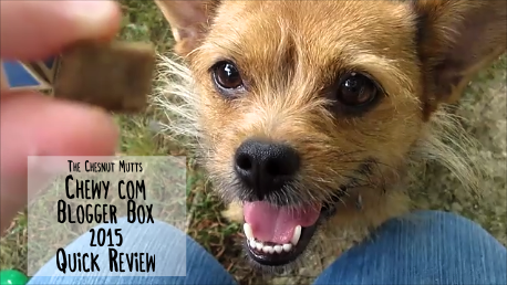 The Chesnut Mutts Chewy.com Blogger Box 2015 Quick Review