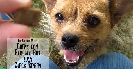 Mini Review Chewy Com Blogger Box June 2015 The Chesnut