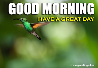 Beautiful Nature Good Morning Quotes with flying birds greetings