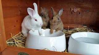 Rabbit food bowls & dispensers