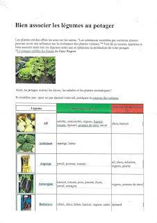 Bien associer les légumes au jardin - Partie 1