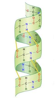 प्रोटीन की परिभाषा क्या है | गुण | लक्षण |वर्गीकरण | प्रकार | प्रोटिन की संरचना | विकृतिकरण