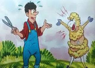 fabula la oveja esquilada