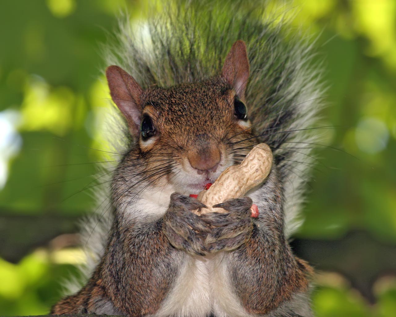 Desktop hd wallpapers - Funny squirrel backgrounds ...