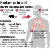 Pharma and Drugs: Hantavirus - Hantavirus pulmonary syndrome ...
