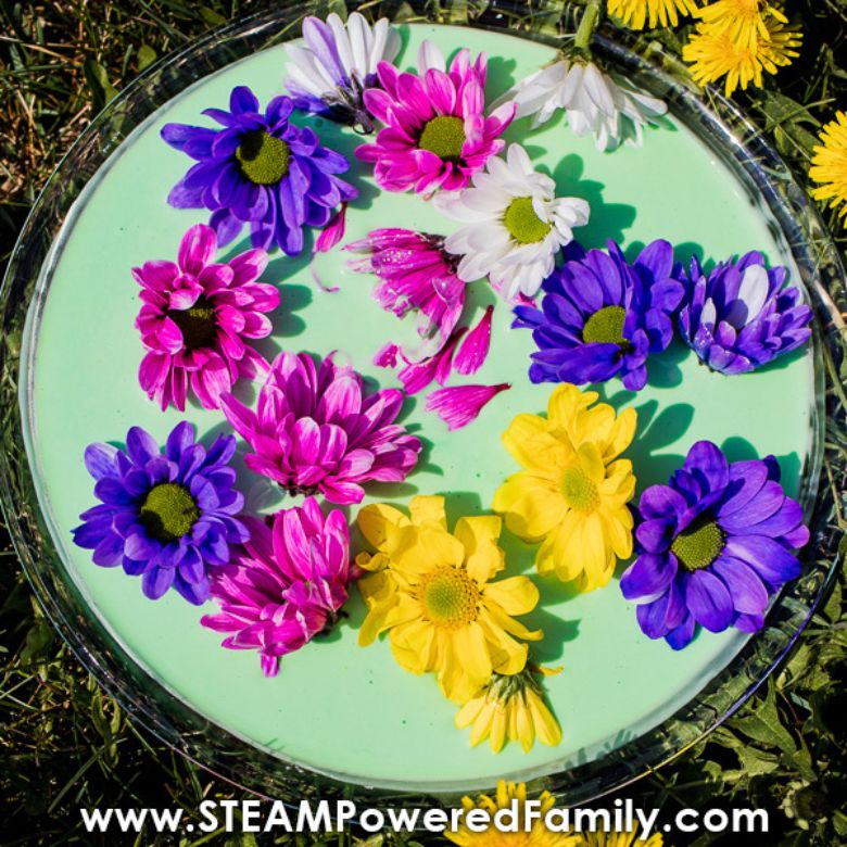 fresh flower oobleck summer activities for preschoolers