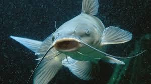 5 Jenis Ikan yang Sebaiknya Tidak Dikonsumsi Walau Umum di Pasaran. The Zhemwel