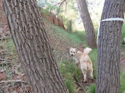 Dog Friendly Activities Santa Fe
