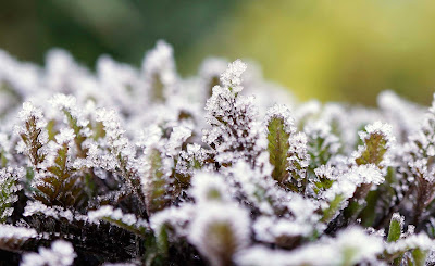 plants, frost,