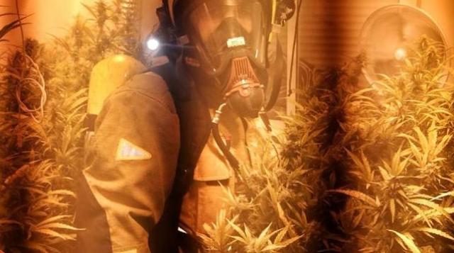 El incendio de una vivienda en Torrevieja descubre una plantación de marihuana en su interior