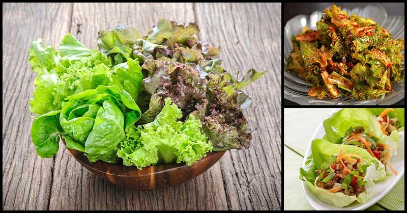 The Antioxidant Power Of Lettuce