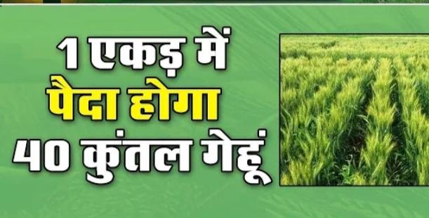 गेहूं का ऐसा बीज जिसे खाद पानी की जरूरत नहीं है, पालीमर कोटेड बीज से फसल उत्पादन में आएगा चमत्कारिक बदलाव, खेती की लागत में भी आएगी कमी