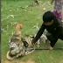 Mira como tres niños rescatan un perro del ataque de una serpiente