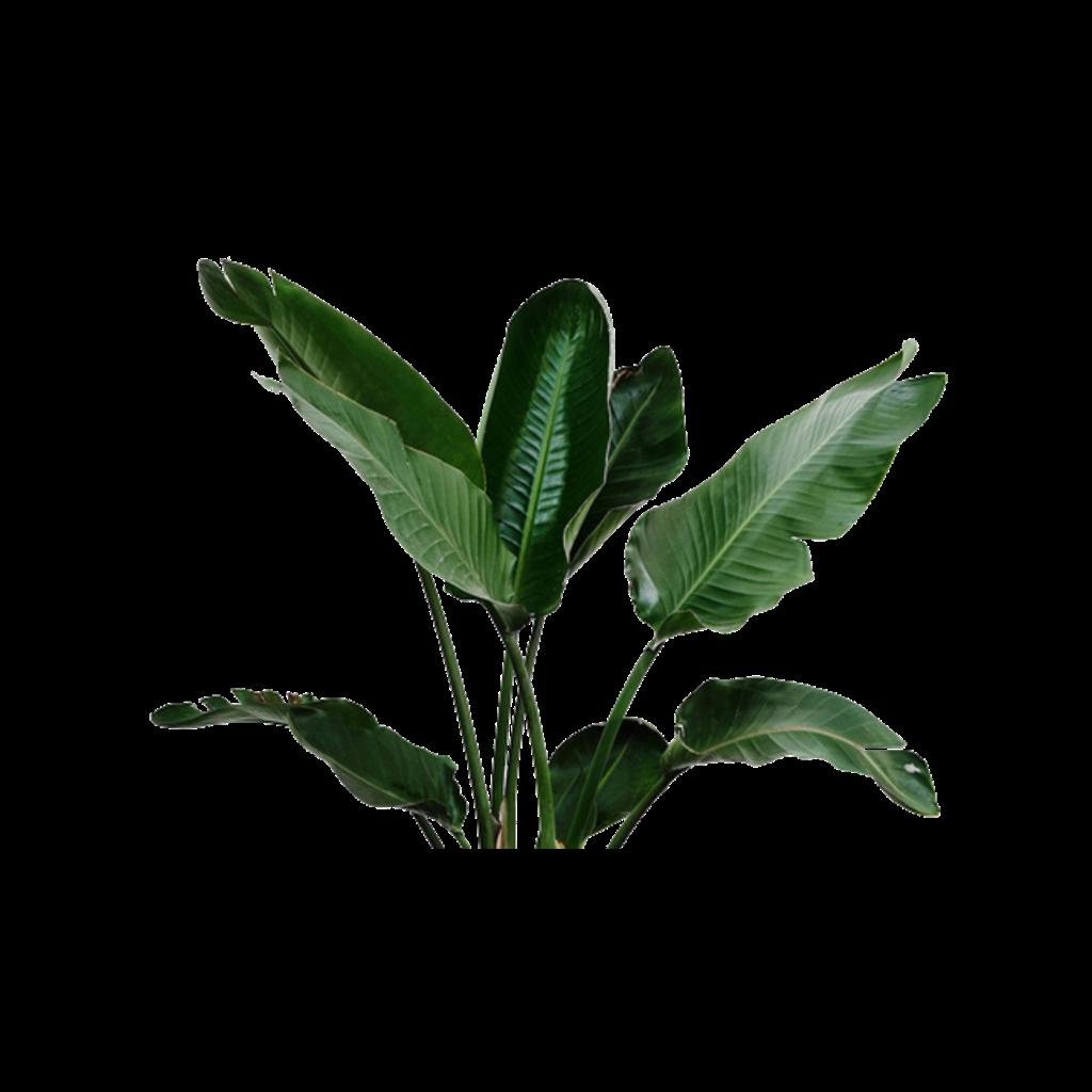 render plantas