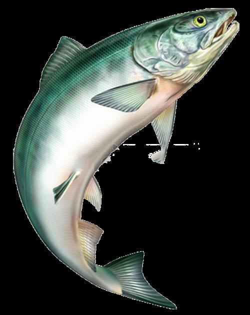 jumping fish, big fish, jump png by: pngkh.com