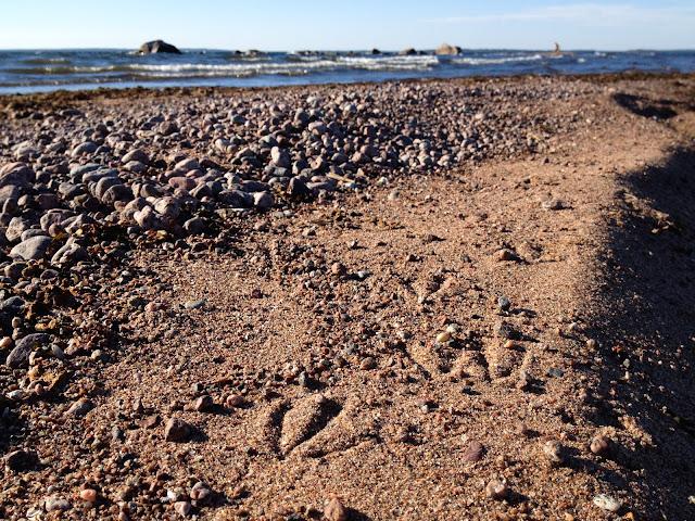 hiekka-soraranta, räpylänjäljet hiekalla