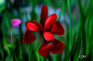 Blumen, flores, Flower, fleurs, květiny, Flores, blomme, blommor, çiçekler, kwiaty, Flor, Hoa, nở hoa, floración, bloom, Kukka, kukinta, La floraison, Fiore,