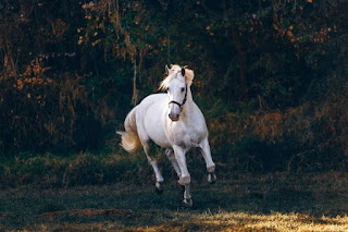 White Horse Moving - Photo by Helena Lopes on Unsplash