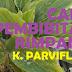 Cara Pembibitan Rimpang Kaempferia Parviflora