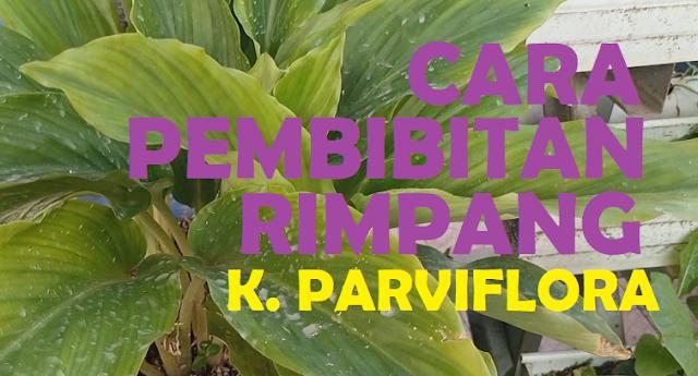 cara pembibitan rimpang k parviflora