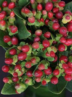 Hypericum%2Bberries%2Bin%2Barrangement.j