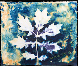 Wet cyanotype_Sue Reno_Image 624