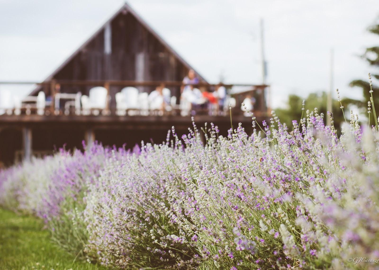 Short Day Trip From Ottawa: Visit Maison Lavande in Summer