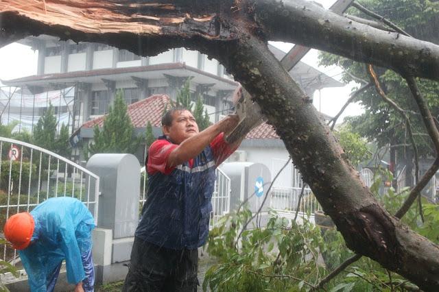 Hujan Deras, Tim Gabungan Singkirkan Pohon Tumbang yang Melintang Jalan