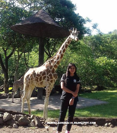 4 Objek Wisata Kota Bogor Yang Cocok Untuk Kamu Kunjungi Mengisi Hari Akhir Pekan Anda