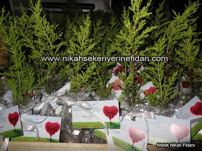 Ankara düğün nikah çamı Seda Kürşat 3