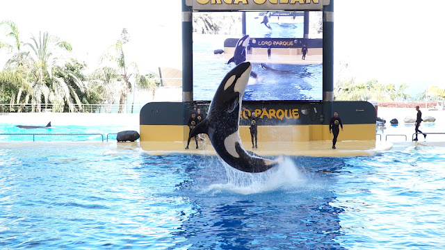 Loro Parque continúa haciendo las presentaciones de animales sin público