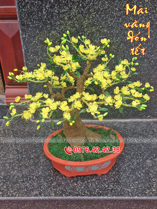 Goc bonsai cay hoa mai tai Mai Dich