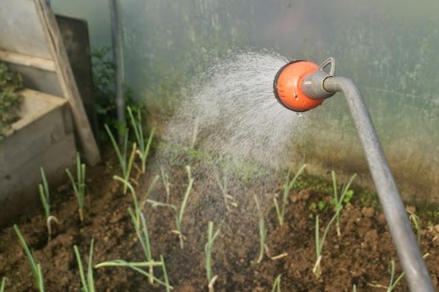 Water wise watering