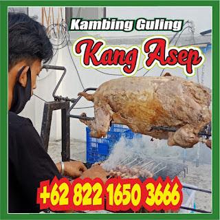 Kambing Guling Muda Pasteur Bandung, kambing guling muda pasteur, kambing guling pasteur, kambing guling bandung, kambing guling,
