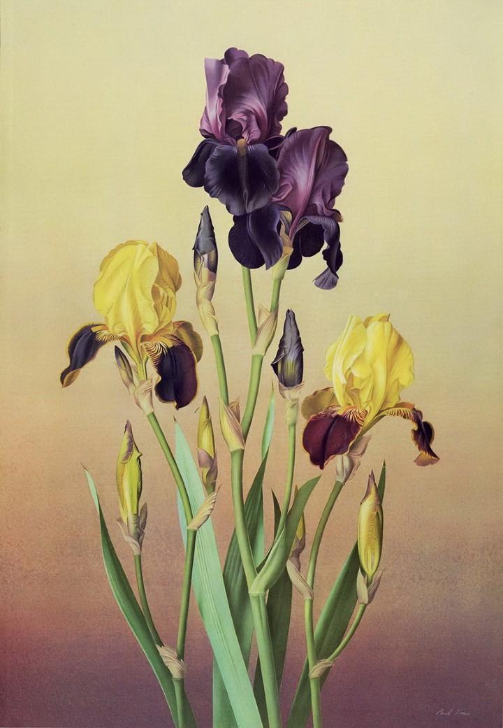 Paul Jones. Акварельные рисунки цветов 41