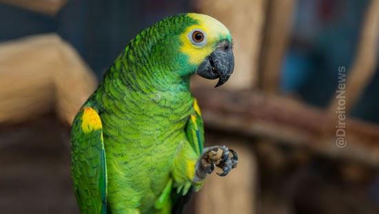 papagaio domesticado 20 anos permanecer tutora