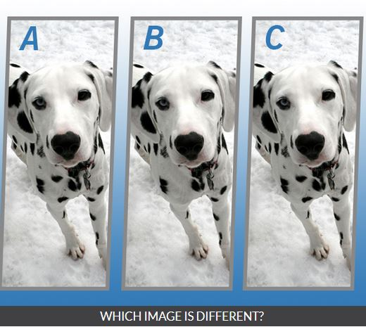 Quiz Diva Spot the Difference Puppy Answers Score 100%