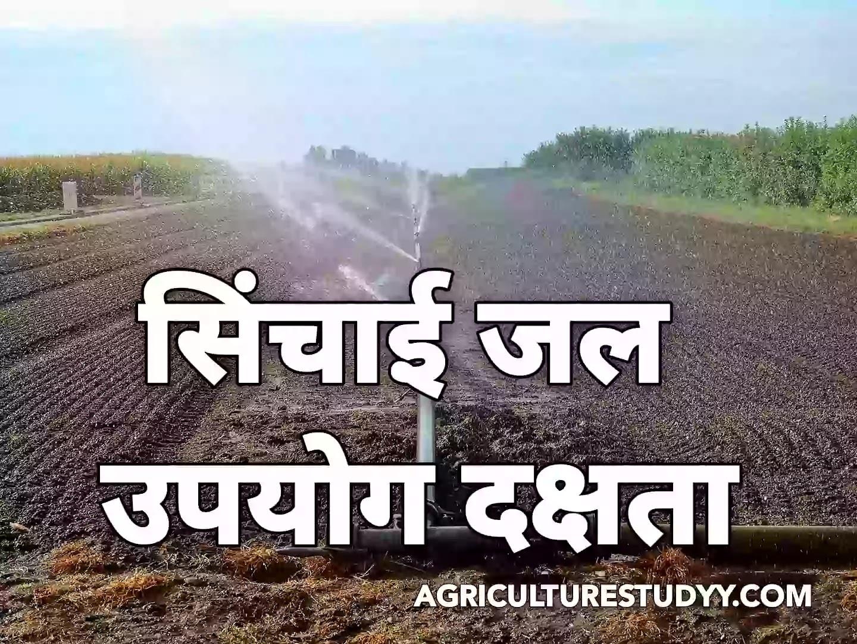 सिंचाई जल उपयोग दक्षता एवं सिंचाई जल मांग, Irrigation Water Efficiency and Water Demand In Hindi, सिंचाई जल दक्षता एवं जल मांग, फसलों की जल मांग दक्षता