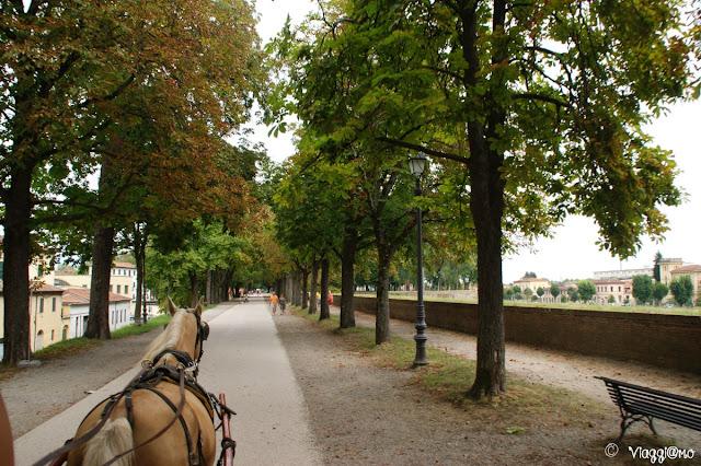 Le Mura oggi pedonali di Lucca con il meraviglioso viale alberato