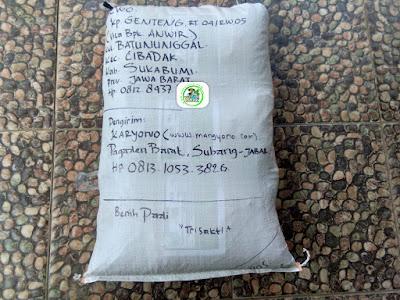 Benih pesana    DEWO Sukabumi, Jabar.   (Sesudah Packing)