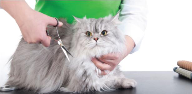 jasa grooming kucing surabaya