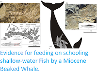 https://sciencythoughts.blogspot.com/2015/09/evidence-for-feeding-on-schooling.html