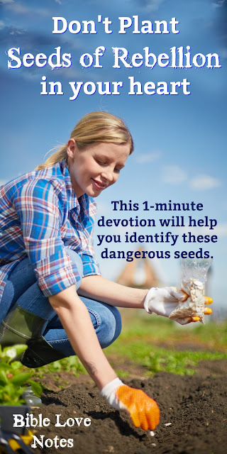 Sometimes a small seed of rebellion left unchecked grows into a vine that completely destroys our faith. This 1-minute devotion gives an example and a warning. #BibleLoveNotes #Bible